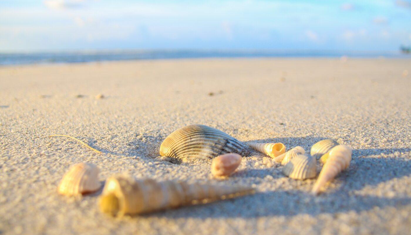 環保理念化作實踐!麗富康國際淨灘守護地球